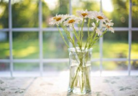 Get a conservatory – 7 reasons to do it this year